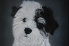 Boomer-Hond-Jonge-bobby op Trespa 30x30 cm