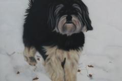 Boomer-Hond-Richie op Doek 40x50 cm