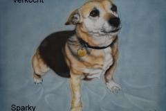 Jack-Russel-Sparky op Doek 40x50 cm
