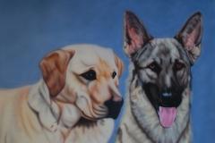 Labrador-en-Herder-Sinta-en-Jesse op Trespa